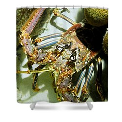 Reef Lobster Close Up Spotlight Shower Curtain by Amy McDaniel