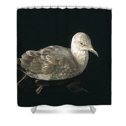 Refections Of A Gull Shower Curtain