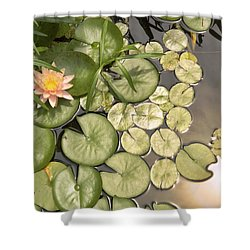 Reflected Light Upon Flowering Water Lilies Shower Curtain by Jason Politte