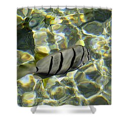 Reflection Fish Shower Curtain