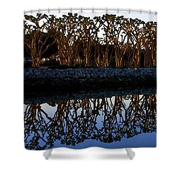 Shower Curtain featuring the photograph Reflections In First Light by Gary Holmes