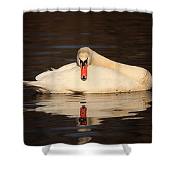 Reflections Of A Swan Shower Curtain by Karol Livote