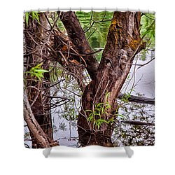 Reflective Trees In A Lake Shower Curtain by Omaste Witkowski