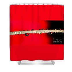 Refractions Of A Red Rose Shower Curtain by Kaye Menner