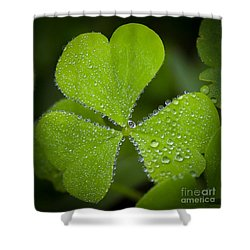 Refreshing Shower Curtain by Kerri Farley