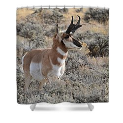 Regal Patriarch Shower Curtain