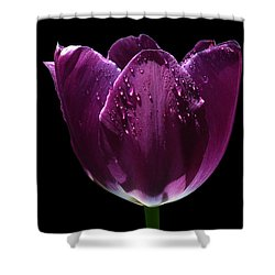 Regal Purple Shower Curtain by Doug Norkum