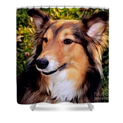Dog - Collie - Regal Shelter Dog Shower Curtain by Luther Fine Art