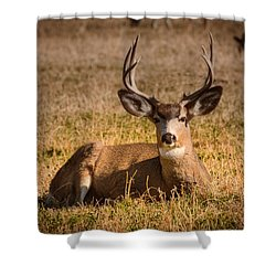 Shower Curtain featuring the photograph Relaxing Buck by Janis Knight