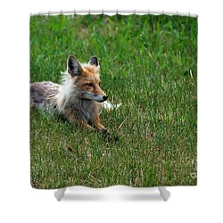 Relaxing Red Fox Shower Curtain by Robert Bales