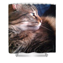 Shower Curtain featuring the photograph Remembering Bo by Jacqueline McReynolds