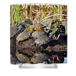 Reptile Refuge Shower Curtain by Al Powell Photography USA