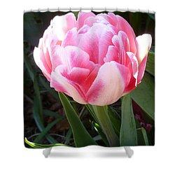 Resplendent Cherry Pink Tulip Shower Curtain by Lingfai Leung