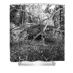Shower Curtain featuring the photograph Tropical Shade by Roselynne Broussard