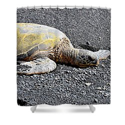 Shower Curtain featuring the photograph Rest Time by David Lawson