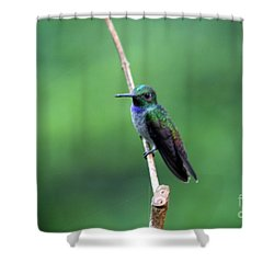 Resting Shower Curtain by Bob Hislop