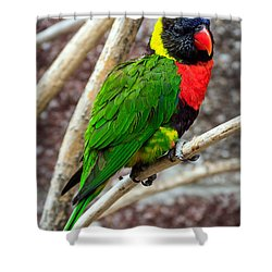 Shower Curtain featuring the photograph Resting Lory by Sennie Pierson