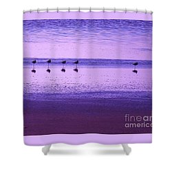 Shower Curtain featuring the photograph Avocets Resting In The Sunset by Michele Penner