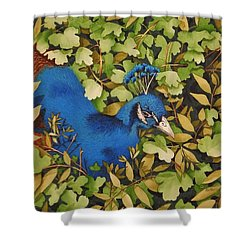 Resting Peacock Shower Curtain