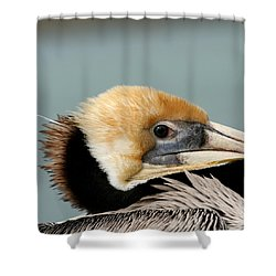 Resting Pelican Shower Curtain by Bob and Jan Shriner