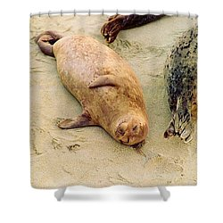 Resting Seal Shower Curtain by Kathy Bassett
