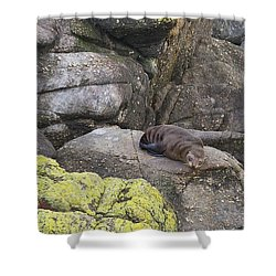 Resting Seal Shower Curtain by Stuart Litoff
