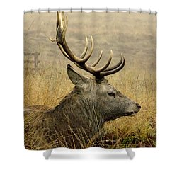Resting Stag Shower Curtain
