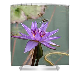 Resting Time Shower Curtain by Karen Silvestri