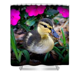 Shower Curtain featuring the photograph Reynolds by Laurie Perry