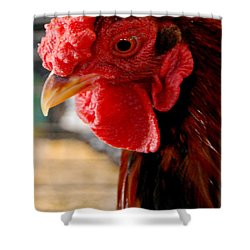 Rhode Island Red Shower Curtain by Eunice Miller