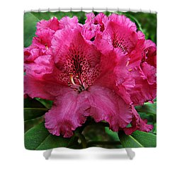 Shower Curtain featuring the photograph Rhododendron ' Bessie Howells ' by William Tanneberger