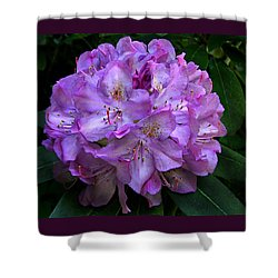 Shower Curtain featuring the photograph Rhododendron ' Roseum Elegans '  by William Tanneberger