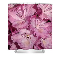 Rhododendron Bliss Shower Curtain by Sara  Raber