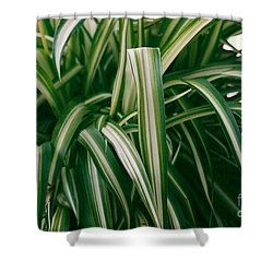 Ribbon Grass Shower Curtain