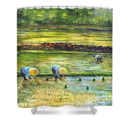 The Rice Paddy Field Shower Curtain
