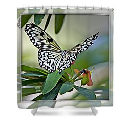 Rice Paper Butterfly 2b Shower Curtain