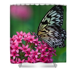 Rice Paper Butterfly Shower Curtain by Joann Vitali