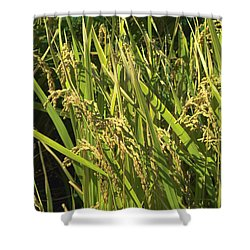 Shower Curtain featuring the photograph Rice by Rachel Mirror