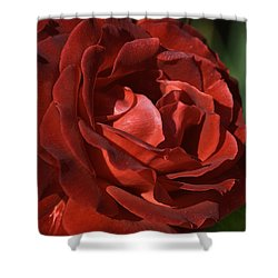 Shower Curtain featuring the photograph Rich Is Rose by Joy Watson