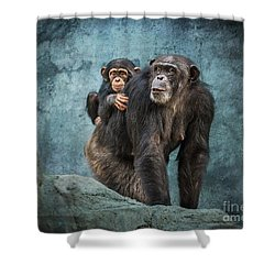 Ride Along Shower Curtain