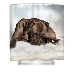 Ridgeback Tenderness Shower Curtain by Lena Lottsfeldt Vincken