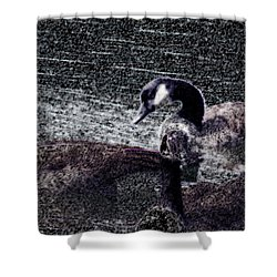 Shower Curtain featuring the photograph Right Behind Ya   by Lesa Fine