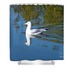 Shower Curtain featuring the photograph Ring-billed Gull by Ann E Robson