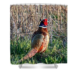 Ring-necked Pheasant Shower Curtain by George Jones