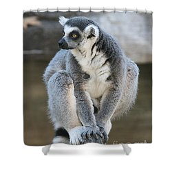 Shower Curtain featuring the photograph Ring-tailed Lemur #3 by Judy Whitton