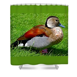 Ringed Teal Drake Shower Curtain