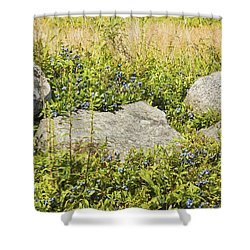 Ripe Maine Low Bush Wild Blueberries Shower Curtain by Keith Webber Jr
