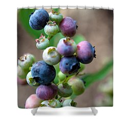 Ripening Blueberries Shower Curtain