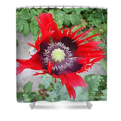 Ripening Poppy Shower Curtain