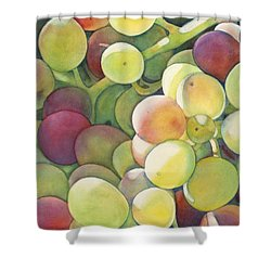 Ripening Shower Curtain by Sandy Haight